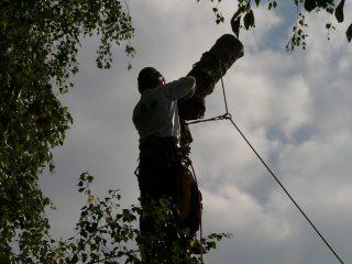 Baumpflege und Fällung